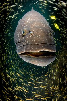 Big Friendly Grouper Photo by Violeta  Jahnel  Brosig -- National Geographic Your Shot
