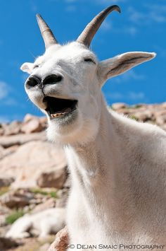 Photographer Dejan Smaic said he thought the animals started laughing/posing I often think this too when I'm behind camera x