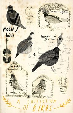 A collection of birds.