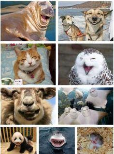 funny animal kingdom photo