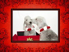 Holiday dogs (created for use in Power Point presentation in clinic lobby while throwing in educational content for clients)