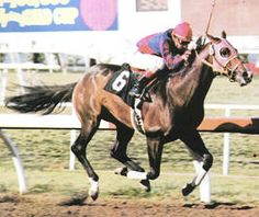 Rich Cream(1975)(Colt)Creme Dela Creme- Right Turn By Turn-To. 3x4 To Nasrullah, 4(C)x4(F)x 5(F) To Nearco, 4(C)x5(F)x5(F) To Mumtaz Begum, 5(C)x5(F)x5(F) To Pharos, 5(F)x5(F) To Bull Lea. 25 Starts 8 Wins 5 Seconds 6 Thirds. $222,420. Won Ack Ack Invitational H, Triple Bend H. Set A New World Record Of 119 2/5 For 7 Furlongs Art Hollywood Park.