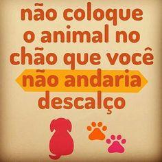 CUIDANDO DE QUEM AMAMOS! #petmeupet #amocachorro #gato #amogato #cachorro #cachorroétudodebom #verao