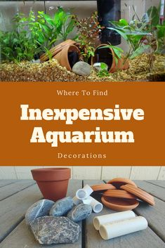 Here's my tip on finding inexpensive aquarium decorions to make your fish tank a great place for fish! Aquarium Decorations, Fish Tank, Great Places, Make It Yourself, Amazing, Garden, Youtube, Plants, Fishbowl