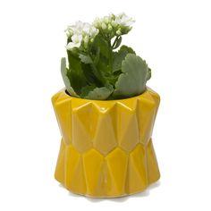 Fang Planter - Sunflower