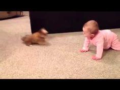 Bebé platica con cachorro Shorkie. ¡Adorable! - YouTube