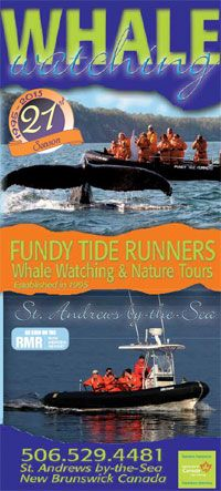 Bay of Fundy Whale Watching by Zodiac in St. Andrews New Brunswick, Canada - Brochure