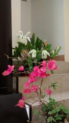Orquídea/ primavera - São Paulo/B 09/2015