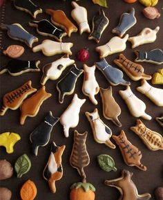 Lovely animal biscuit
