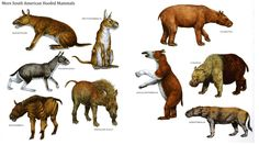 South American hoofed mammels,during the Miocene and Paleocene periods