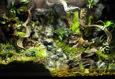 Frogs and More Frogs: Vivarium Photos From Vivarium Concepts