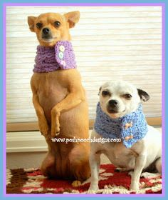 Rosie Bell and Maximo Modeling  my newest design. Cable Stitch Dog Cowl With Buttons. I had a lot of people asking  for a small ...