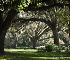 Just a few miles north of Seaside and Seagrove, you can experience the dreamy romance of a bygone era at Eden Gardens State Park. This 161-acre park is a wonderland of ancient moss-draped oaks, punctuated by gorgeous views of Choctawhatchee Bay and Tucker Bayou. With March typically being the peak blooming season, camellias and azaleas still offer dazzling displays from October through May. Eden Gardens is also home to tended rose gardens, a butterfly garden and a reflection pond filled with ...