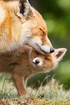 Moderskärlek