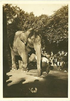 Durban - Mitchell Park 'Nellie the Elephant' . Pretoria, Wwii, South Africa, Elephant, Park, City, Pictures, Animals, Beautiful