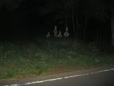 "spookymrsboo:From r/creepy: ""I was driving down a woodsy back road in the mountains when I saw something out the corner of my eye. Arte Horror, Horror Art, Images Terrifiantes, Lila Baby, Creepy Pictures, Scary Photos, Southern Gothic, Back Road, Side Road"