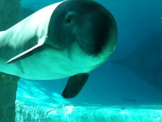 Jack the baby dolphin at Vancouver aquarium