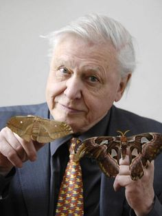 """Sir David Attenborough warned about the dangers our butterflies face: """"More - The Independent"""