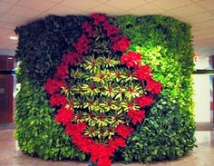 Green Wall decorated for the holidays with Poinsettias.    Learn more about green walls @ http://www.ambius.com/green-walls/index.html