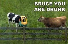 Crack me up !! Bruce-you-are-drunk #hilarious #quote
