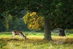 english meadow - Google Search