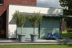 Basic vlonderterras met 2 grote potten met olijfbomen en Fermob stoeltjes in blauwtinten www.biesot.nl