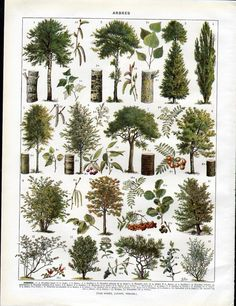 Set of 2 Vintage Color Prints of Trees and by VintagePaperWorks