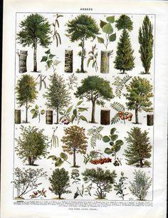 Set of 2 Vintage Color Prints of Trees and by VintagePaperWorks