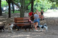 As part of Outdoors Week we're searching for New York City's best dog park. Nominate your dog park or run by writing us a short description of what makes it great and telling us why your dog. Hillside Park, Brooklyn Heights, Dog Runs, Dog Park, Best Dogs, Your Dog, Nyc, Puppies, Animals