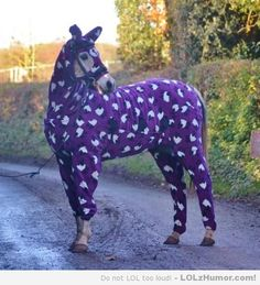 Have you seen a horse in a onesie today - LOLz Humor