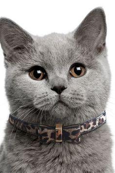 Leopard Print Bow Tie Cat Collar