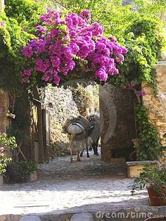 Photo about Donkeys hauling cargo in the narrow pedestrian walkways at Monemvasia, Lakania, Greece. Image of monument, roof, lakania - 1237828 Beautiful Islands, Beautiful Places, Monemvasia Greece, Corinth Canal, Go Greek, Travel Log, Scene Image, Greek Islands, Places To See