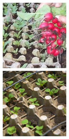 Редиска в яичных кассетах. Идея на миллион! Seed Planter, Companion Planting Chart, Raised Garden Bed Plans, Bottle Garden, Garden Trellis, Garden Plants, Biodegradable Products, Vegetable Garden, Container Gardening