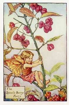 Spindle Berry Fairy  -  Cicely Mary Barker's Flower Fairies of the Autumn.  Barker, English poet and artist, authored the first of the Flower Fairy books in 1923.   The series features delightful illustrations of fairies with flowers of various seasons, gardens and trees.The Flower Fairies of the Autumn was first published in 1926.  These prints are from First or early editions of this work.