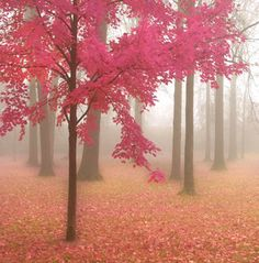Misty Morning in Pink by donnageissler via Etsy