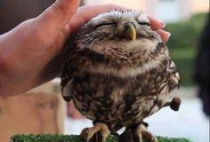 An owl. A cute, little, itty bitty owl. <3