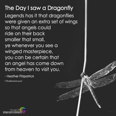 The dragonfly totem carries the wisdom of transformation and adaptability in life. Dragonflies Carry Significant Meaning: Do you see them often? Dragonfly Symbolism, Dragonfly Quotes, Dragonfly Images, Dragonfly Tattoo Design, Dragonfly Art, Dragonfly Tatoos, Dragonfly Painting, Dragonfly Jewelry, Tattoo Designs