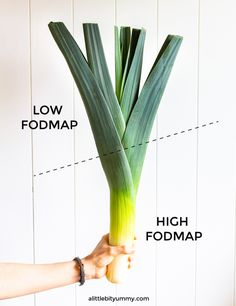 Check out this guide on how to use leek leaves to replace onion while on the low FODMAP diet. Fodmap Recipes, Diet Recipes, Ibs Fodmap, Onion Leeks, Fructose Free, Ibs Diet, Simple Photo, Plant Based, Leaves