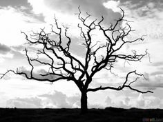 I love dead trees~I don't think of trees as being dead, I think of them coming alive with beauty.