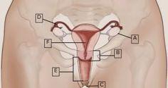 11 faits étonnants sur le clitoris ! Le numéro 5 doit être connu de toutes les femmes !