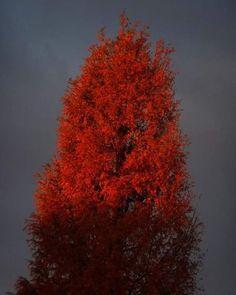 ガラモンが。   #tree #樹