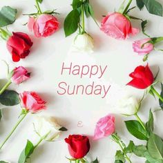 Sunday Morning Quotes, Sunday Wishes, Good Morning Happy Sunday, Good Afternoon Quotes, Happy Sunday Quotes, Greetings Images, Have A Happy Day, Good Morning Greetings, Good Morning Wishes