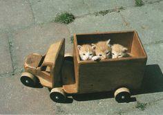 Awnn #cat
