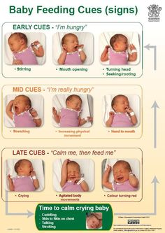 Baby feeding cues. Link to full description of image