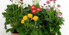 7 manfaat tanaman hias dalam ruangan yang jarang diketahui