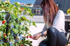 Mit dem Minigarden Vertical können vertikale Gärten sowohl im Innen- und Außenbereich gestaltet werden. Ab sofort bei uns erhältlich! #urbangardening #verticalfarming #verticalgardening