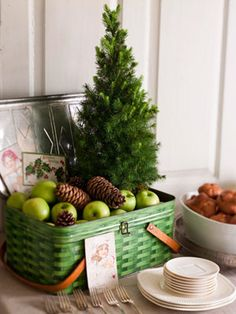 <3 potted dwarf Alberta Spruce in picnic tin with apples & pinecones