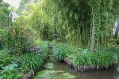 Would you be curious to see the lake with lilies painted by Claude Monet, Japanese bridge and famous garden, which was not merely a place, but the artist's way of life ? It is just one hour away from Paris ! Read article on our blog. . . #monet #artist #impressionist #impressionism # japanesegarden #claudemonet #garden #givergny Famous Gardens, Claude Monet, Lilies, Van Gogh, Impressionism, Parisian, Bridge, Japanese, Lifestyle