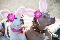 Happy Easter! - http://www.thepositivepitbull.org/