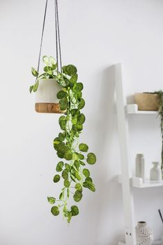 100 Beautiful Hanging Plant Stand Ideas Here Are Tips On How To Decorate It DIY: Plant hanger The 10 Best Indoor Hanging Plants to Turn Your Home Into a Jungle Foliage Plants - Indoor House Plants Fake Plants Decor, House Plants Decor, Ikea Fake Plants, Bedroom Plants Decor, Decorating With Fake Plants, Decorate With Plants Indoors, Plants For The Bedroom, Vine House Plants, Indoor House Plants